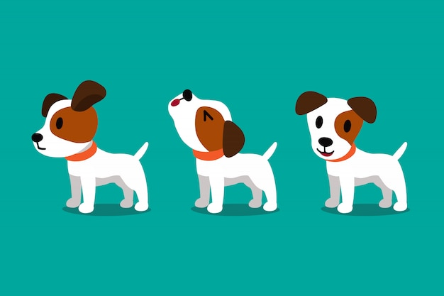 Cute jack russell terrier dog poses