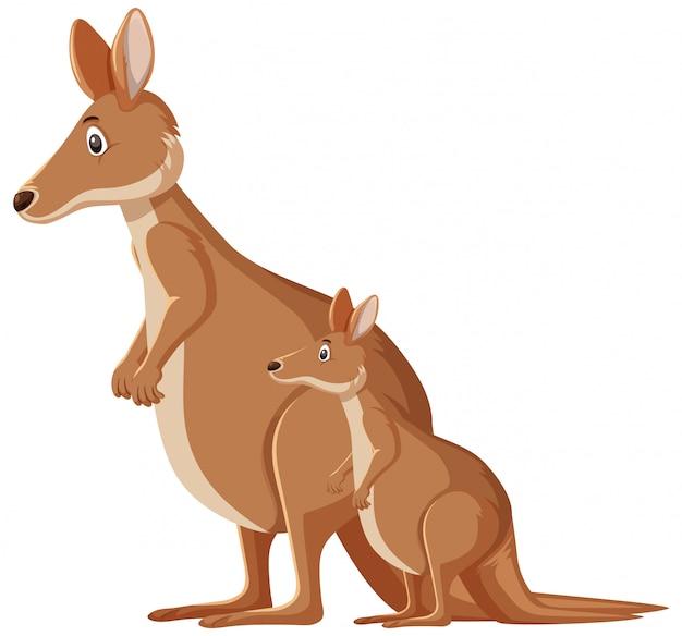 Милые кенгуру стоя
