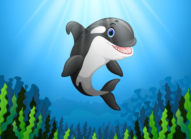 Cute killer whale under water