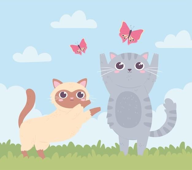 Cute kitties playing