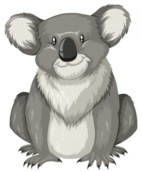 Cute koala sitting alone