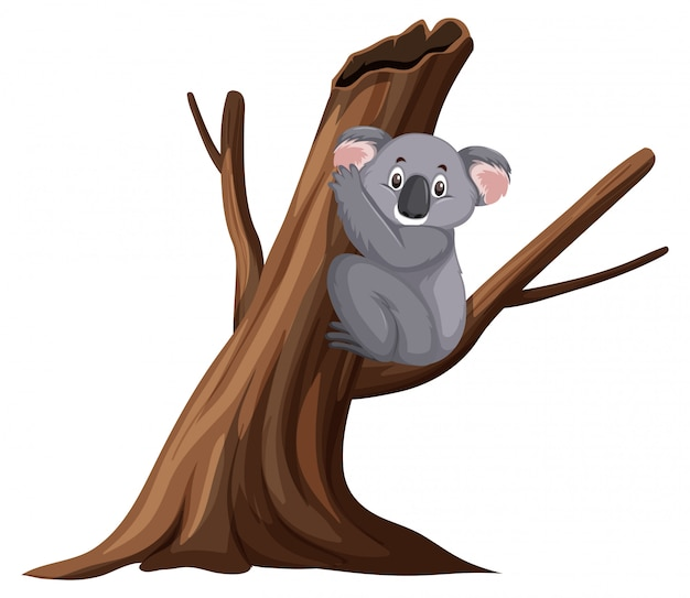 Cute koala sitting on the branch on white