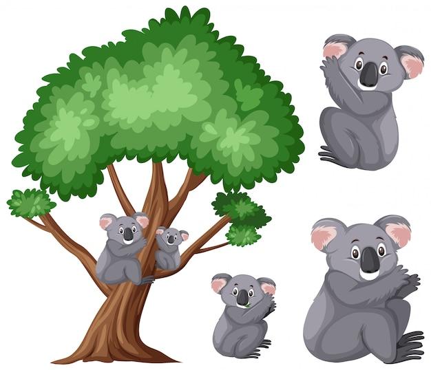 Cute koalas on the big tree on white