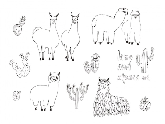 Cute lama, alpaca and cactuses set. hand drawn illustration