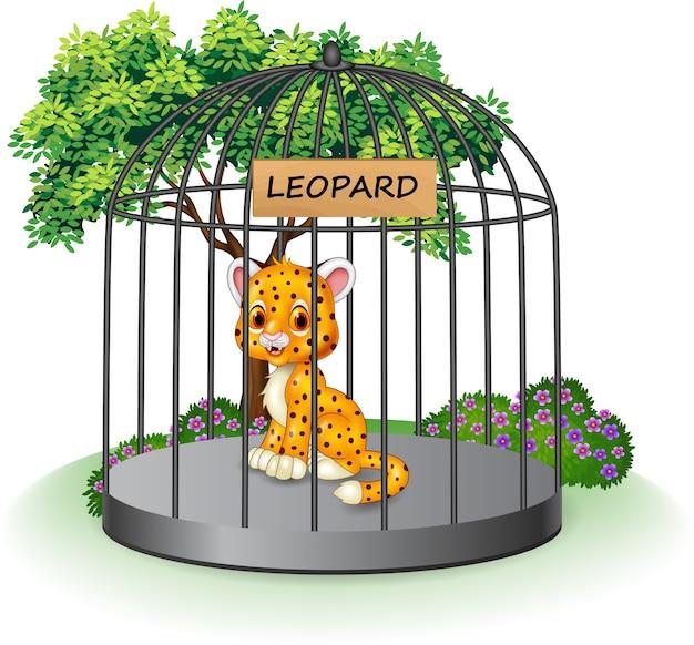 Cute leopard in a cage
