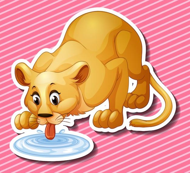 Милый лев пьет воду из лужи