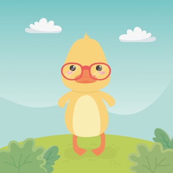 Cute and little duck in the field