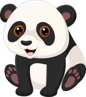 Cute little panda sitting isolated on white background