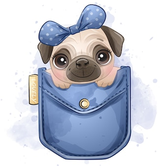 Cute little pug sitting inside the pocket