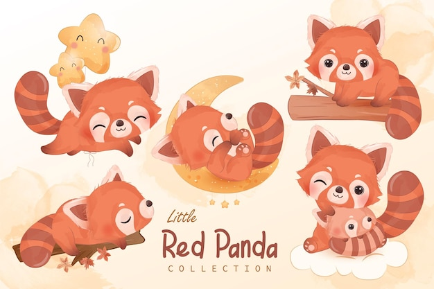 Cute little red panda clipart collection in watercolor illustration