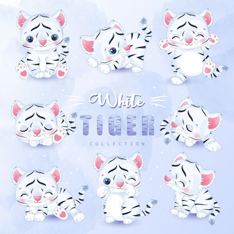 Cute little white tiger collection set