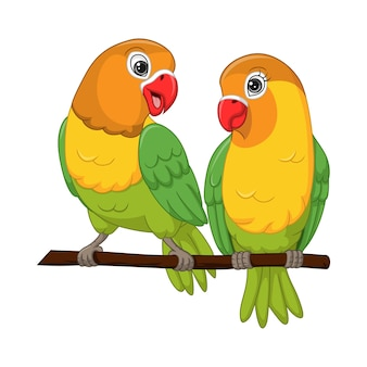 Cute lovebirds couple standing on a tree branch