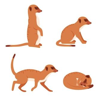 Cute meerkat in different poses.