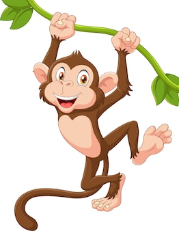 Cute monkey animal hanging on a vine