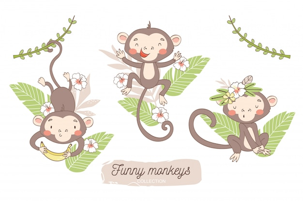 Cute monkey baby. jungle animal cartoon character.