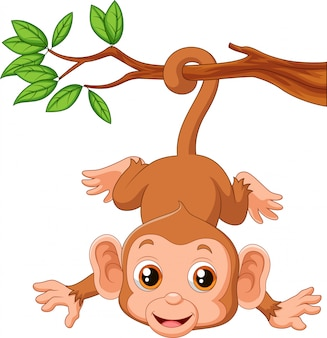 Cute monkey hanging on a tree