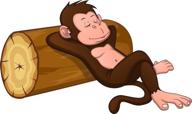 Cute monkey is sleeping