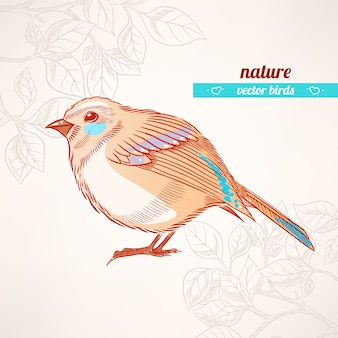 Cute orange and turquoise bird