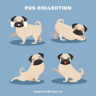 Cute pack of happy pugs