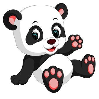 Cute panda good posing