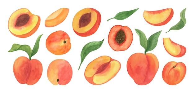 귀여운 복숭아 과일 수채화 클립 아트 신선한 여름 과일 복숭아 가지의 삽화