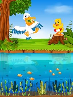 Милый пеликан и утка в реке