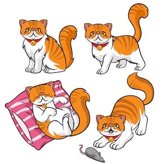 Cute persian cat set