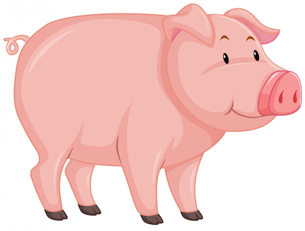 Cute pig with pink skin on white