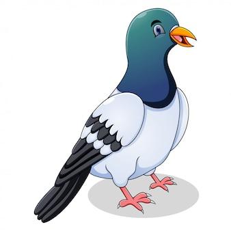Cute pigeon cartoon