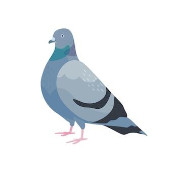 Симпатичные голуби плоские векторные иллюстрации. городская птица с темно-серым оперением. вид сбоку пернатого голубя. городская фауна, пернатая фауна. одомашненные летающие животные, изолированные на белом фоне.