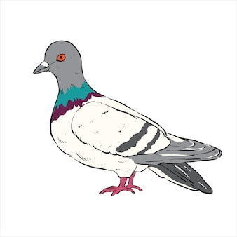 흰색 배경에 손으로 그리는 귀여운 비둘기 또는 스케치 스타일