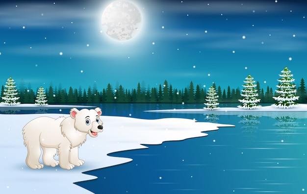 Cute polar bear in the winter