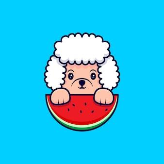 Cute poodle dog holding watermelon cartoon icon illustration