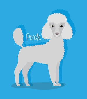 Cute poodle dog pet character