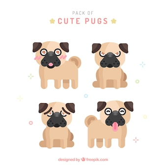 Cute pug collection with flat design