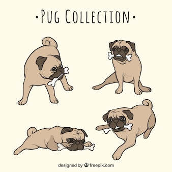 Cute pugs with hand drawn style