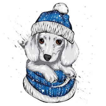Милый щенок в шляпе санта-клауса.