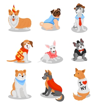 Cute purebred puppies set, pedigree dog characters  illustrations on a white background