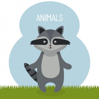 Cute raccoon in the field landscape character