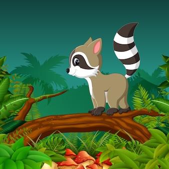 Милый енот, идущий по дереву