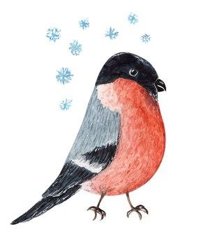 かわいい赤と黒の水彩画のクリスマスブルフィンチ