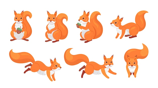 Cute red squirrel set