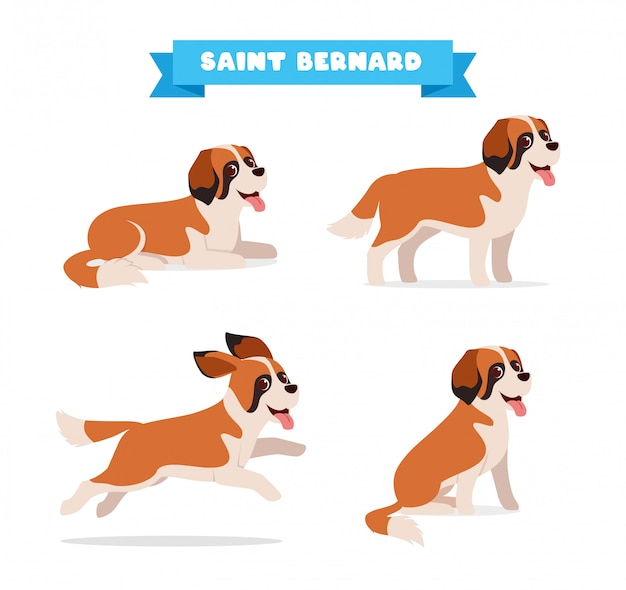 Cute saint bernard dog animal pet with many pose bundle set