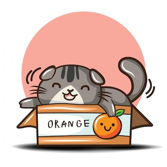 Cute scottish fold cat cartoon