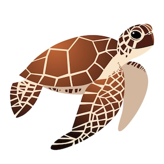 귀여운 바다 거북 만화 그리기, 흰색 배경에 그림.