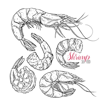 Cute set of cooked different shrimps