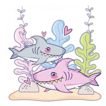 Cute shark couple animal with seaweed plants