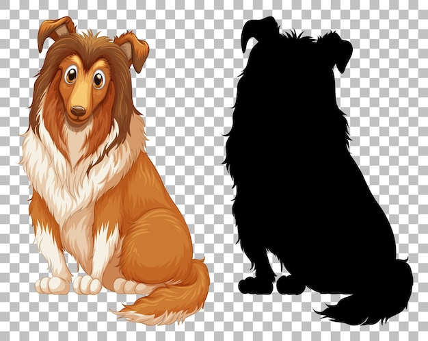 Cute shetland sheepdog and its silhouette on transparent