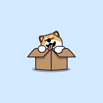 Cute shiba inu dog in the box