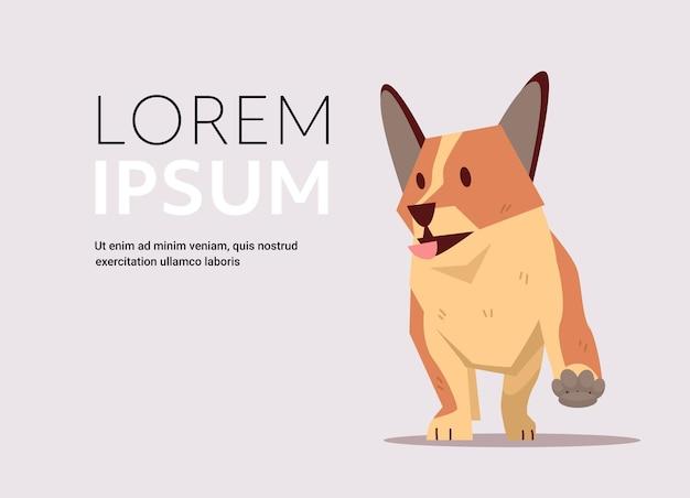 Милый шиба ину собака пушистый человеческий друг домашнее животное концепция мультфильм животное полная длина горизонтальная копия пространство векторная иллюстрация